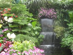 Beautiful Hawaiian Zen Garden With Waterfall Pond Hawaii Desktop