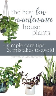 Low maintenance indoor plants : the easy houseplants I own and love Rubber Plant, Rubber Tree, Low Maintenance Indoor Plants, Leafy Plants, Diy Plant Stand, Snake Plant, Plant Needs, Grow Your Own Food, Diy Planters