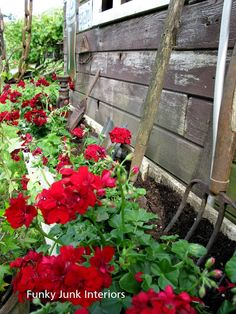 love the idea of putting old rusty garden tools by the garden shed in the garden. - love the idea of putting old rusty garden tools by the garden shed in the garden….from funky junk - Beautiful Gardens, Beautiful Flowers, Rusty Garden, Garden Junk, Rustic Planters, Red Geraniums, Funky Junk Interiors, Summer Flowers, Red Flowers