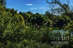 Checkout Howard Roberts newest photo uploaded to fine art america, All of Howards photo can be either on a framed canvas, printed on canvas,metal, shower curtains, hand bags, cell phone cases, and towels. So stop on by his website and check it out, don't forget to like and comment #wallart #nature #fineart #howardroberts
