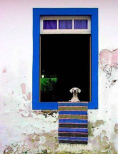 20 Cute Pictures of Waiting Dogs, Looking Through A Window By: Stephanie Kay-Kok Gift From Heaven, Window View, Rear Window, Through The Window, Windows And Doors, Dog Life, Beautiful Images, Pet Birds, New Art