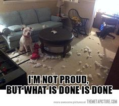 What is done is done. #funnydogs #funny #dogs CHLOE!!!  NALA!!!