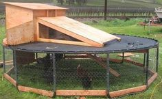 Old trampoline = covered chicken coop/enclosure. Not sure how well this would work in the winter though.