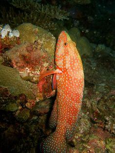 Love nature, hug a coral :-) by FR.Baginda c/o 1CheekyChimp, via Flickr