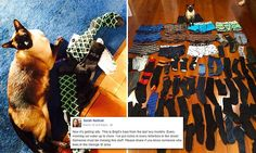 New Zealand cat exclusively steals underwear and socks from neighbours...Brigit, a tonkinese cat, has taken 11 pairs of men's boxers in two months   The six-year-old cat prowls the streets of Hamilton, New Zealand, at night Brigit has also collected 50 pairs of socks and likes to steal them in pairs The sticky-pawed animal leaves them around the house and backyard.