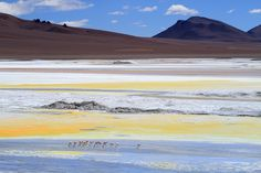 Salar de Pujsa, Atacama Desert, Chile.Natural colors. It is located at an elevation of 4,507 meters above sea level. Photography by Itamar Campo