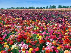 Why You're Sneezing: The Most Beautiful Flowers in Bloom This Spring