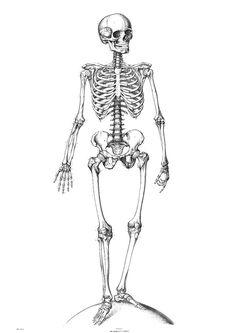 Kleurplaat skelet