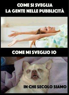 Buongiornissimo! No. Silly Jokes, Funny Jokes, Hilarious, Funny Animal Memes, Funny Animals, Funny Images, Funny Photos, Serious Quotes, Funny Scenes