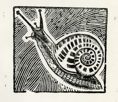 Snail - woodcut - Dora Carrington, 1893-1932 U.K.