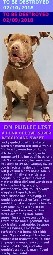 MURDERED 02/10/18 --- Hello, my name is Lucky. My animal id is #19677. I am a male tan dog at the Manhattan Center. The shelter thinks I am about 2 years 1 weeks old.  I came into as a stray on 01-Feb-2018.  Lucky is at risk due to being diagnosed with Canine Infectious Respiratory Disease  http://nycdogs.urgentpodr.org/lucky-19677/