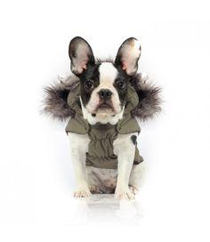 Manteau special pug et bulldog nanook - Milk and pepper : achat / vente manteaux pour chien sur jaiplusdecroquettes.com [www.jaiplusdecroquettes.com]