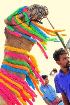 Color draped camel