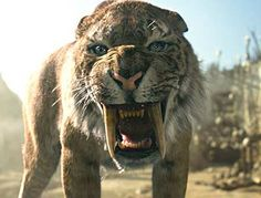 You might like to know Saber tooth tiger facts about its physical characteristics, habitat, diet, extinction and species. The cat is not tiger at all. Prehistoric World, Prehistoric Creatures, Desenhos Clash Royale, Sabretooth Tiger, Tiger Habitat, Tiger Facts, Vida Animal, Extinct Animals, Big Cats