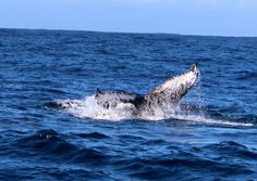 Whale Watching with Ocean Odyssey in Knysna, so much to see out there