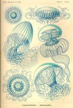 Ernst Haeckel - Art Forms in Nature