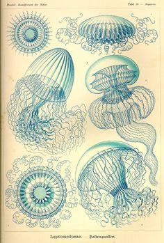 Ernst Haeckel - Art Forms in Nature