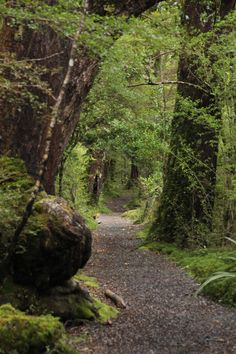 A magical walk that takes you to another world. A path through an abundance of moss and fern in New Zealand. Lake Gunn Nature Walk, 45 minute loop walk through abundant moss in an Alpine rainforest. 1 hr from Milford Sound.