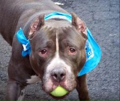 WILL BE KILLED TDY http://nycdogs.urgentpodr.org/arby-a1053614/ #NYC @RuthDSegura @saveallanimals2 @shellieRNCEN @Catgirl0818 @MiraJayC