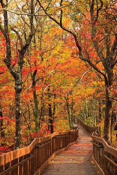 Cheaha State Park, Alabama.  This walk way makes it possible for everyone to be able to make it out to Bald Rock for the amazing view.  Great views from the park's restaurant as well and fab spot to watch a sunset.