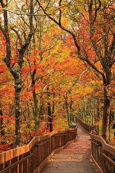 Cheaha State Park, Alabama.