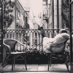 Think this is a balcony somewhere in Paris...