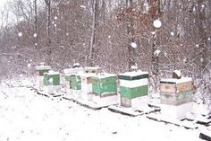 The Beekeeping Year Starts In The Fall