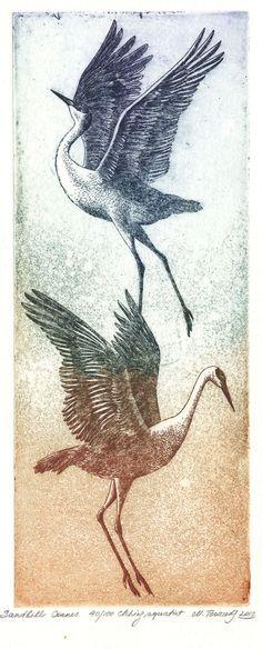 Sandhill cranes - Marina Terauds