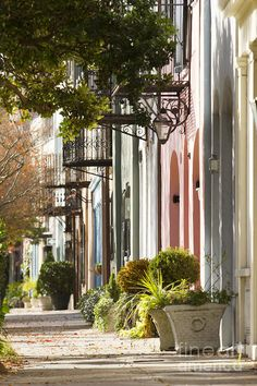 Rainbow Row Charleston Sc Print featuring the photograph Rainbow Row Charleston Sc 2 by Dustin K Ryan Charleston Sc, Rainbow Row Charleston, Charleston South Carolina, Fachada Colonial, Live Oak Trees, True Homes, Low Country, Elegant Homes, Travel Pictures