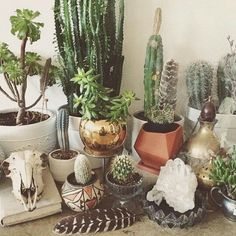 Room decoration using cactus is never ending. Starting from the real cactus, cactus displays, to the cactus made of stone. Methods, planting media, and pots used to plant cactus and important infor… Cacti And Succulents, Planting Succulents, Cactus Plants, Garden Plants, Planting Flowers, Indoor Garden, Indoor Plants, Small Cactus, Plants Are Friends