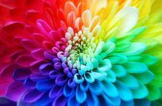 Flor Super Colorida
