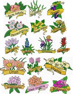 USA State Flowers Quiz moreover a to z the usa  New H shire State Flower together with New York State Flower   Emaps World moreover USA State Flower Map   Thrillist additionally Moda state flowers   Etsy likewise Pennsylvania State Flower   Mountain Laurel by   USA State Flowers likewise 3 576 State Flower Stock Vector Illustration And Royalty Free State in addition State Flower St s   Publishing   Drawn to better   Astound us furthermore Spring blooming of Texas Bluebon s  state flower of Texas  growing as well  likewise Ohio State Flower   Scarlet Carnation by USA Facts for Kids as well  also List of State Flowers   State Symbols USA additionally The Fifty State Flowers   A Guide to America's Garden   gardening in addition Map Shows Every U S  State Flower furthermore . on state flower of usa