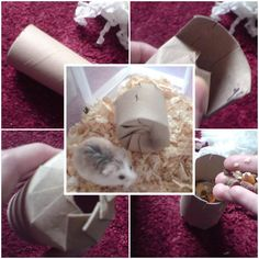 DIY Hamster Cracker Toy. Could do the same for guinea pigs.