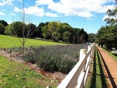 Tamborine Mountain, Vineyard, Sidewalk, Outdoor, Outdoors, Vine Yard, Side Walkway, Walkway, Vineyard Vines