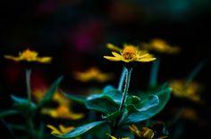 Flower  Beautiful  Shadow  Light  Colors