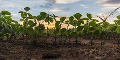 Memphis, TN: Training Sustainable Farm Entrepreneurs | HopeNutriServices