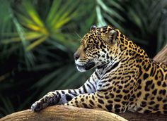 Amazon River Cruise Information - Jungle Blog.jpg
