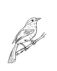 Today we are going to be learning how to draw a bird. Drawing a bird is actually deceptively easy, and this has been one of my favorite tutorials to make.    For this tutorial, I have chosen a very typical-looking bird. I did this because every bird is built from the same basic shapes. Learning how to draw a very ordinary bird will give you the understanding of how to expand on that basic template, and draw any other bird you want.