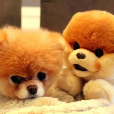 Boo and his plushy counterpart <3