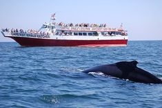 Book your tickets online for Cape May Whale Watcher, Cape May: See 446 reviews, articles, and 213 photos of Cape May Whale Watcher, ranked No.2 on TripAdvisor among 21 attractions in Cape May.