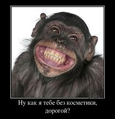 обезьяна демотиватор животные косметика улыбка