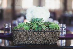 Natural, elegant and organic are words that come to mind when seeing these gorgeous succulents provided by Susan's Garden...