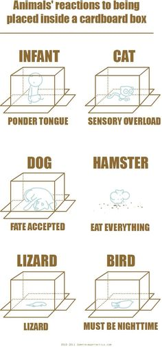 Animals Reactions To Being Placed Under Cardboard Box