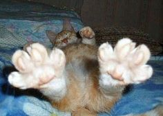 My feets!