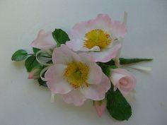 Dog Roses, via Flickr.