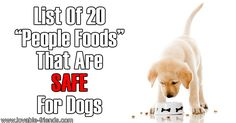 All too often, it is assumed by people that if a food is good for us humans, then it must also be fine for our beloved pets. The truth is, this is absolutely NOT the case. Several of the foods we eat should... [read more]