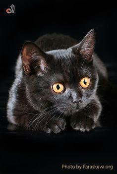 Black cat by PARASKEVA07 :) SO FLIPPIN CUTE!!!!!!!!!!!!!!!!!!!!