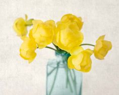 "Fine Art Flower Photography Print """"Yellow Globeflower No. 2"""""