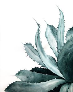 Poised Agave - Print Watercolor Cards, Watercolor Paintings, Original Paintings, Watercolour, Botanical Illustration, Graphic Design Illustration, Beautiful Notes, Deco Floral, Love Painting