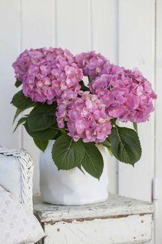 Tips On Sending The Perfect Arrangement Of Flowers – Ideas For Great Gardens Hortensia Hydrangea, Hydrangea Flower, Flower Pots, Chrysanthemums, Blooming Flowers, Fresh Flowers, Beautiful Flowers, Bouquet Champetre, Hydrangea Arrangements